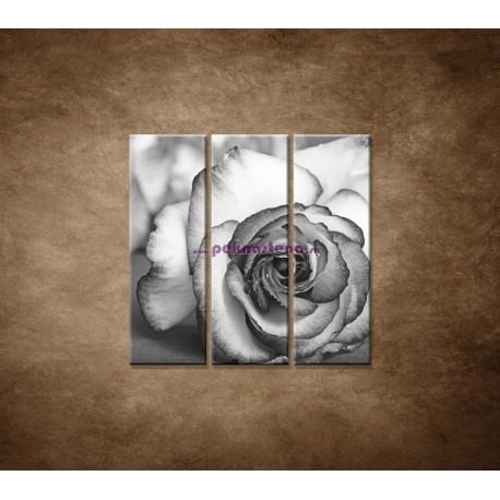 Obrazy na stenu - Ruža - 3dielny 90x90cm