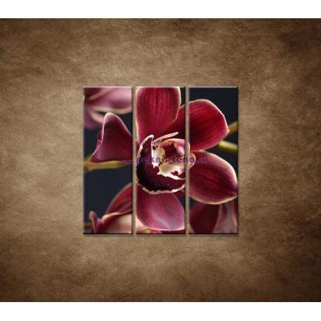 Obrazy na stenu - Bordová orchidea - 3dielny 90x90cm