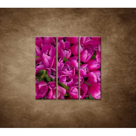 Obrazy na stenu - Krásne tulipány - 3dielny 90x90cm