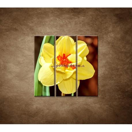 Obrazy na stenu - Narcis - detail - 3dielny 90x90cm
