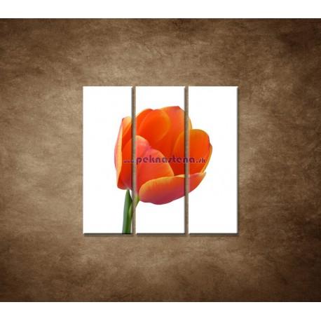Obrazy na stenu - Tulipán - detail - 3dielny 90x90cm