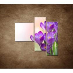 Obrazy na stenu - Krokusy - 3dielny 110x90cm