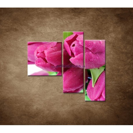 Obrazy na stenu - Tulipány - 3dielny 110x90cm