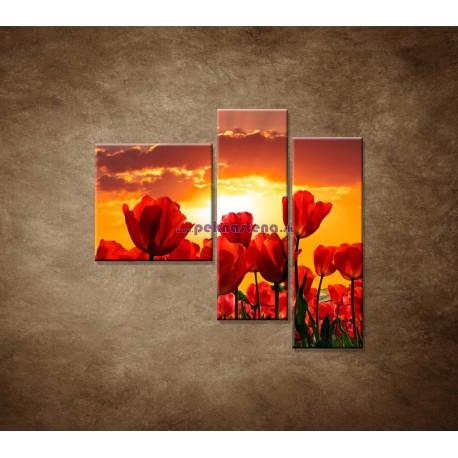 Obrazy na stenu - Západ slnka nad tulipánmi - 3dielny 110x90cm