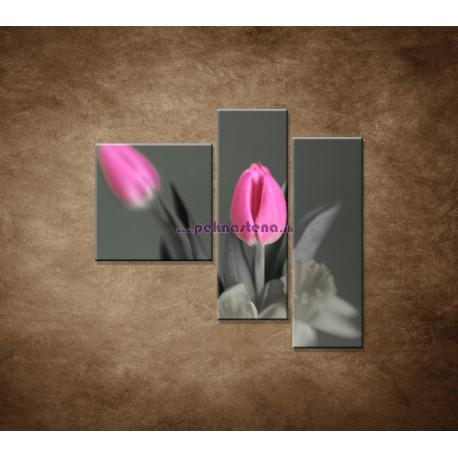 Obrazy na stenu - Ružové tulipány - 3dielny 110x90cm