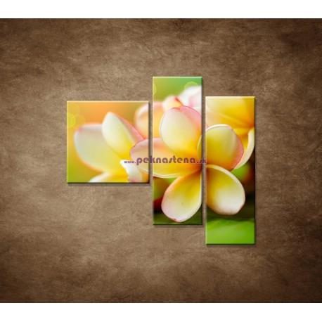 Obrazy na stenu - Žltá orchidea - 3dielny 110x90cm