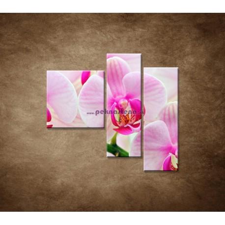 Obrazy na stenu - Ružová orchidea - 3dielny 110x90cm