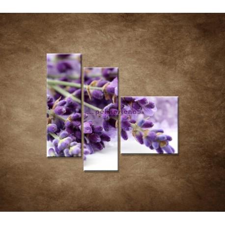Obrazy na stenu - Kvet levandule - 3dielny 110x90cm