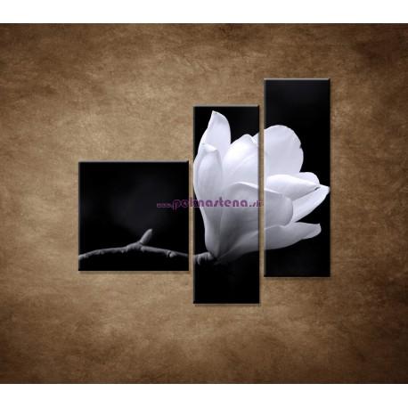 Obrazy na stenu - Kvet magnólie - 3dielny 110x90cm