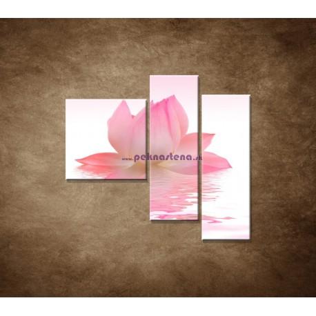 Obrazy na stenu - Lotosový kvet - 3dielny 110x90cm