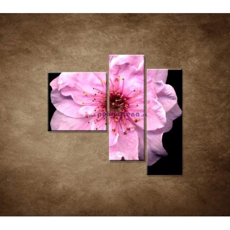 Obrazy na stenu - Kvet čerešne - 3dielny 110x90cm