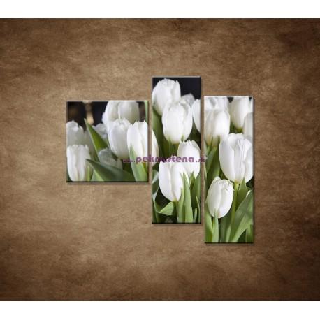 Obrazy na stenu - Biele tulipány - 3dielny 110x90cm