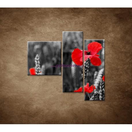 Obrazy na stenu - Červené vlčie maky - 3dielny 110x90cm