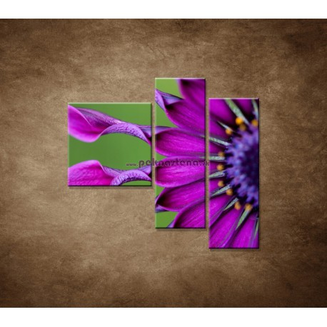 Obrazy na stenu - Tropický kvet - 3dielny 110x90cm