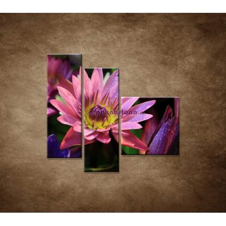 Obrazy na stenu - Lotosové kvety - 3dielny 110x90cm