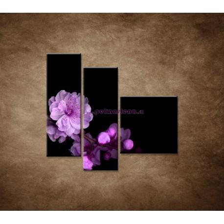 Obrazy na stenu - Čerešňový kvet - 3dielny 110x90cm