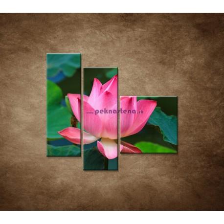 Obrazy na stenu - Lekno 2  - 3dielny 110x90cm