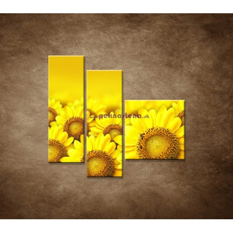 Obrazy na stenu - Lúka slnečníc - 3dielny 110x90cm