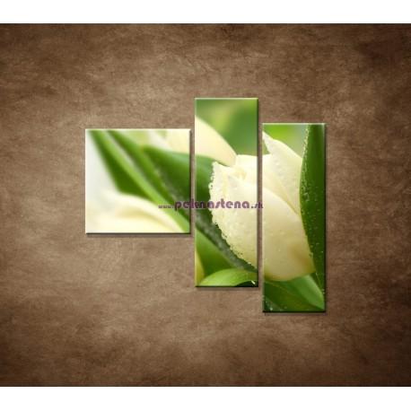 Obrazy na stenu - Rosa na tulipáne - 3dielny 110x90cm