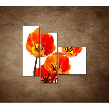Obrazy na stenu - Oranžové tulipány - 3dielny 110x90cm