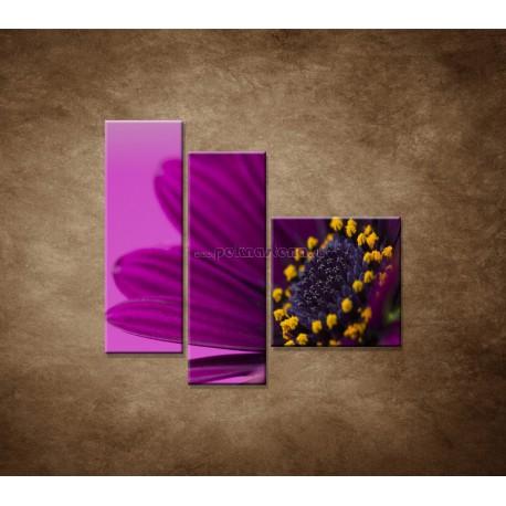 Obrazy na stenu - Fialová gerbera - 3dielny 110x90cm