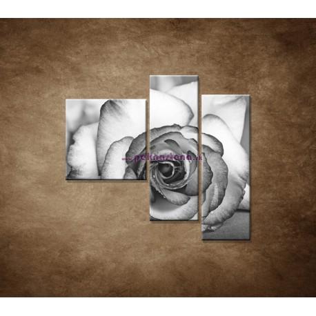 Obrazy na stenu - Ruža - 3dielny 110x90cm