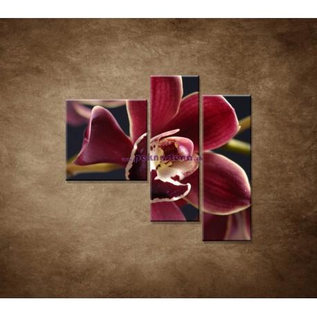 Obrazy na stenu - Bordová orchidea - 3dielny 110x90cm