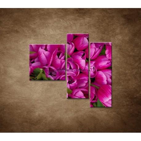Obrazy na stenu - Krásne tulipány - 3dielny 110x90cm
