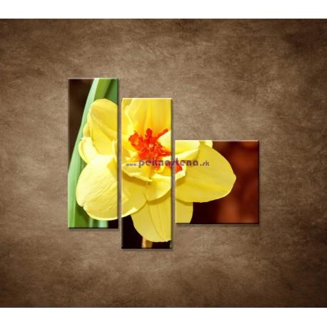 Obrazy na stenu - Narcis - detail - 3dielny 110x90cm