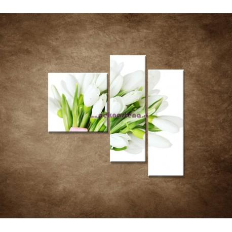 Obrazy na stenu - Snežienky - 3dielny 110x90cm
