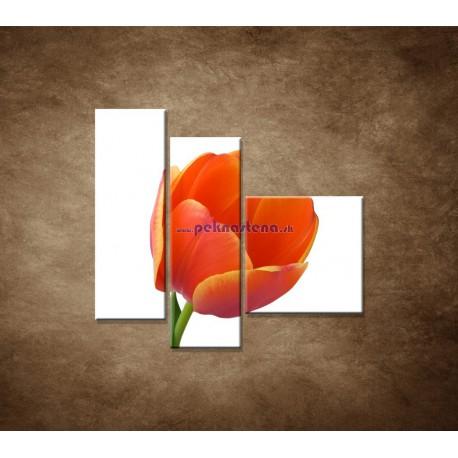 Obrazy na stenu - Tulipán - detail - 3dielny 110x90cm