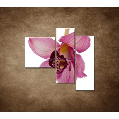 Obrazy na stenu - Orchidea - detail - 3dielny 110x90cm