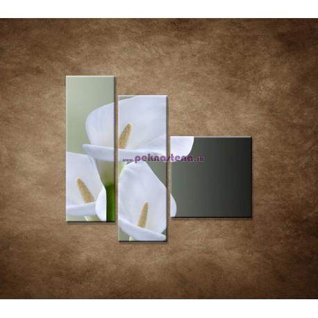 Obrazy na stenu - Tri biele kaly - 3dielny 110x90cm