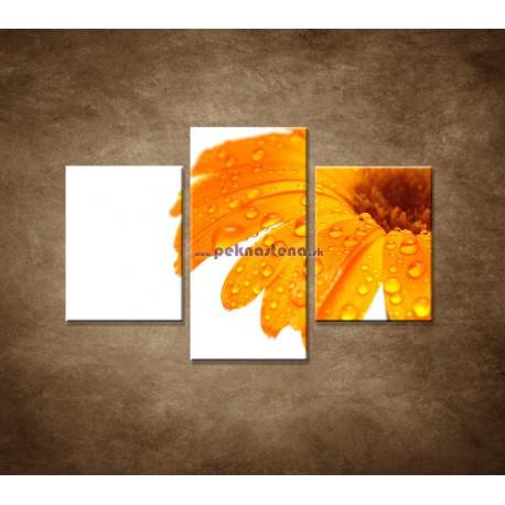 Obrazy na stenu - Oranžová gerbera - 3dielny 90x60cm
