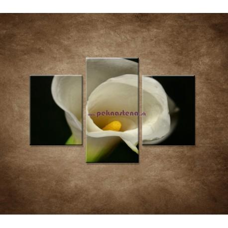 Obrazy na stenu - Kala - 3dielny 90x60cm