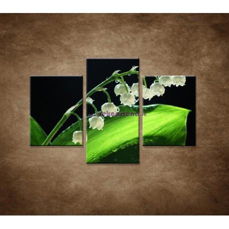 Obrazy na stenu - Konvalinka - 3dielny 90x60cm