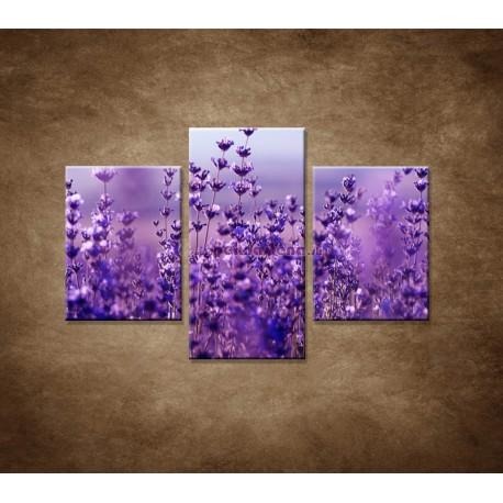 Obrazy na stenu - Levanduľa - 3dielny 90x60cm