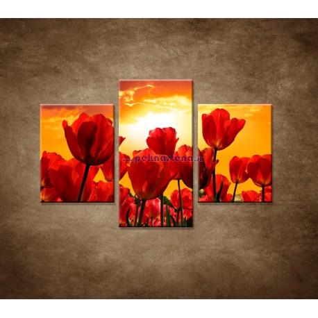 Obrazy na stenu - Západ slnka nad tulipánmi - 3dielny 90x60cm