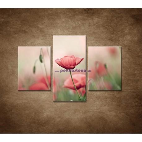 Obrazy na stenu - Vlčie maky - 3dielny 90x60cm