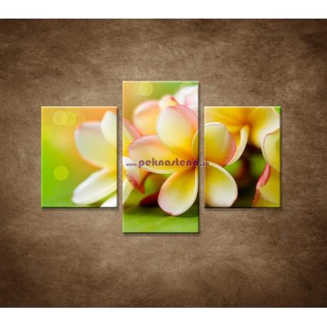Obrazy na stenu - Žltá orchidea - 3dielny 90x60cm