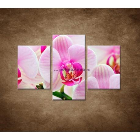 Obrazy na stenu - Ružová orchidea - 3dielny 90x60cm