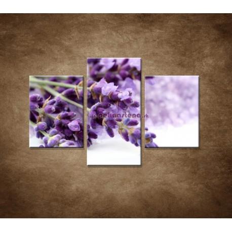 Obrazy na stenu - Kvet levandule - 3dielny 90x60cm