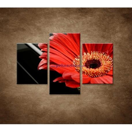 Obrazy na stenu - Gerbera - 3dielny 90x60cm