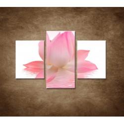 Obrazy na stenu - Lotosový kvet - 3dielny 90x60cm
