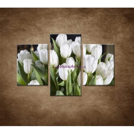 Obrazy na stenu - Biele tulipány - 3dielny 90x60cm