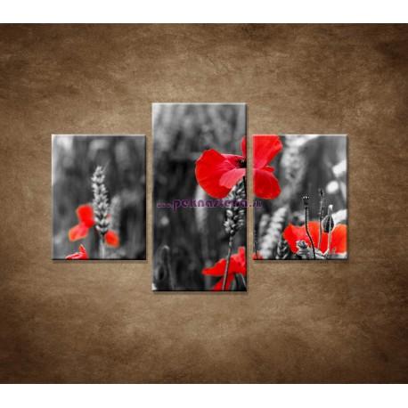 Obrazy na stenu - Červené vlčie maky - 3dielny 90x60cm