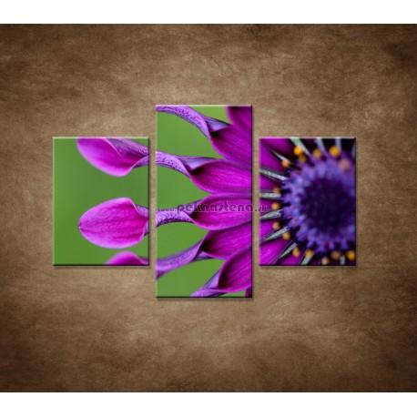 Obrazy na stenu - Tropický kvet - 3dielny 90x60cm