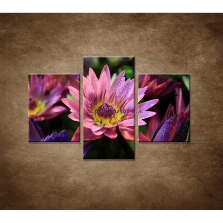 Obrazy na stenu - Lotosové kvety - 3dielny 90x60cm