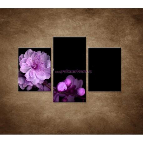 Obrazy na stenu - Čerešňový kvet - 3dielny 90x60cm