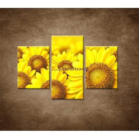 Obrazy na stenu - Lúka slnečníc - 3dielny 90x60cm